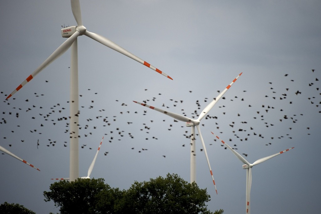 windmills with birds
