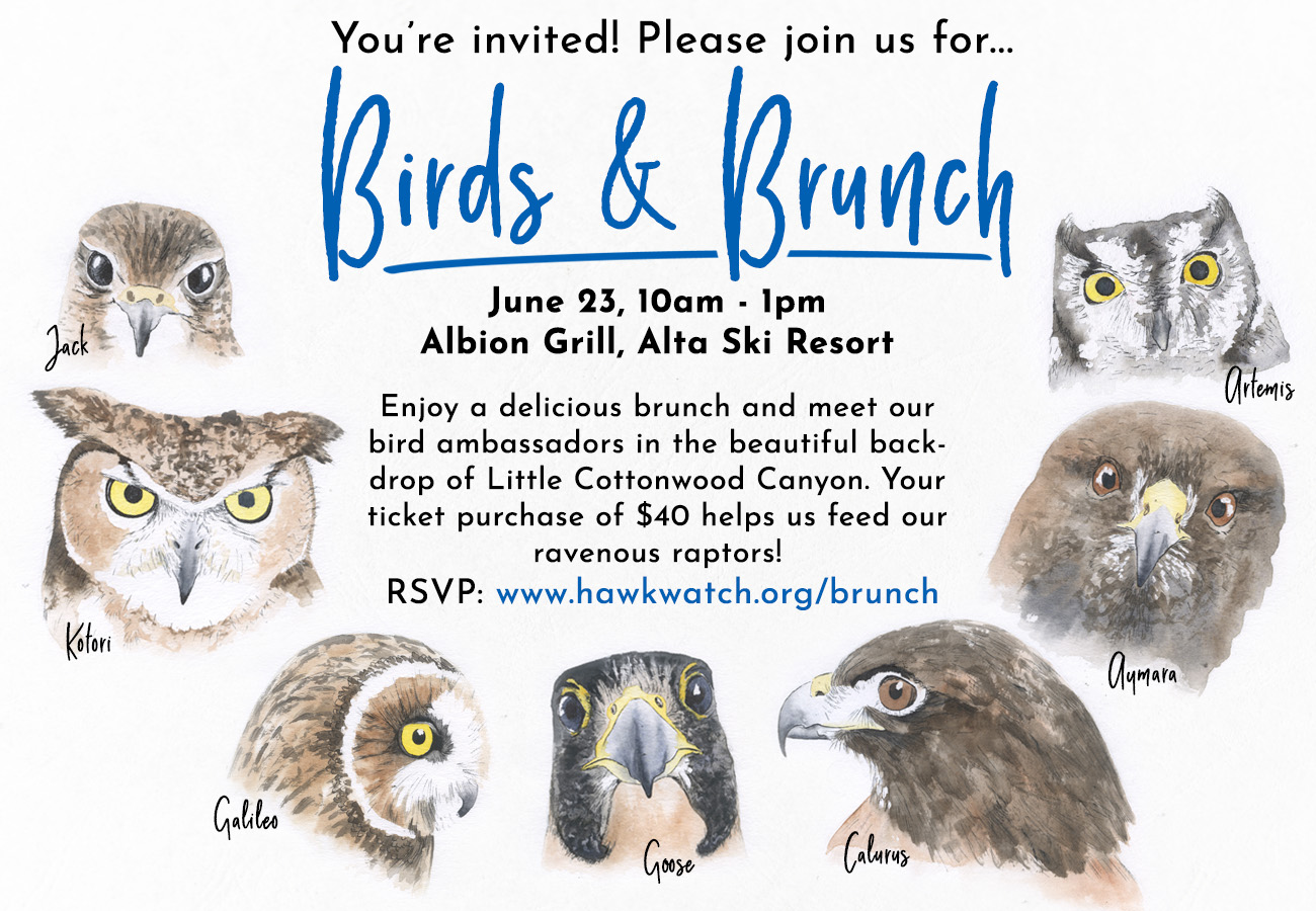 Birds and Brunch invite