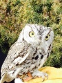 Provo School District Owl Program