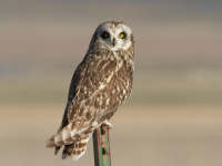 WAfLS Orientation (Short-eared Owl Project)