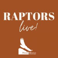 Raptors Live: Night and Day
