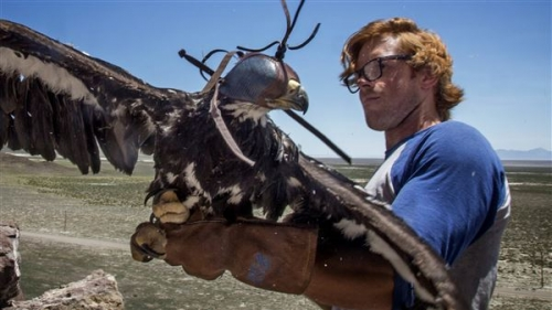 Standard Examiner story on our Golden Eagle research