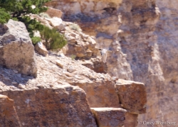 Grand Canyon: High Winds and Hawks
