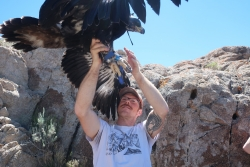 Eric working with a Golden Eagle nesting. Photo by Steve Slater