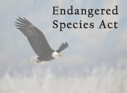 Letter to Utah Congressional Delegation in support of maintaining and strengthening the Endangered Species Act