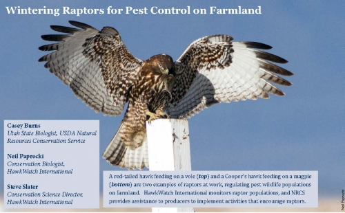 Wintering Raptors for Pest Control on Farmland