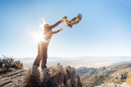 Migration crew member Shelley Kremer releases a Golden Eagle. Photo by Forest Woodard