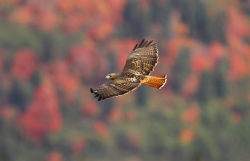 Fall Migration Festivals